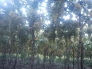 للبيع و تركيب اعمدة الاسمنتية عريش العنب